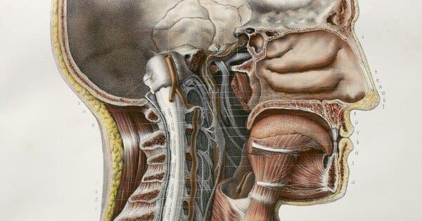 Phát hiện cơ quan hoàn toàn mới trong cơ thể người: tuyến nước bọt thứ 4