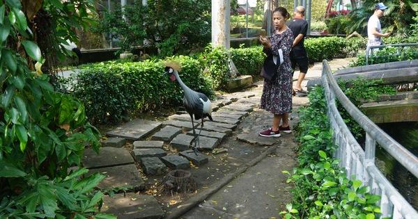 Thảo Cầm Viên Sài Gòn xin hỗ trợ để vượt qua khó khăn do COVID-19