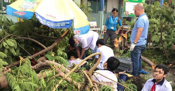 Cây phượng vĩ trong sân trường bật gốc, 13 học sinh ở TP.HCM bị thương
