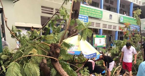 Cây phượng vĩ trong sân trường bật gốc, 18 học sinh ở TP.HCM bị thương