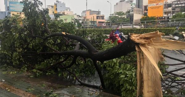 TP.HCM: Mưa lớn nước chảy như lũ trên phố, cây xanh tét nhành đè người đi đường