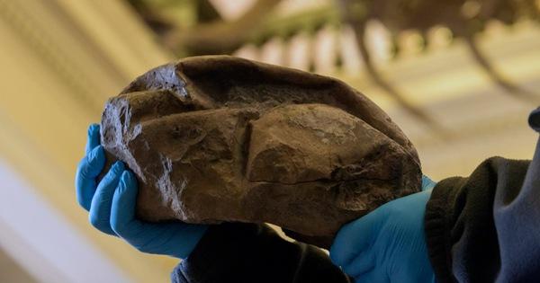 Phát hiện hóa thạch quả trứng thằn lằn lớn nhất trong thời đại khủng long - kết quả xổ số gia lai