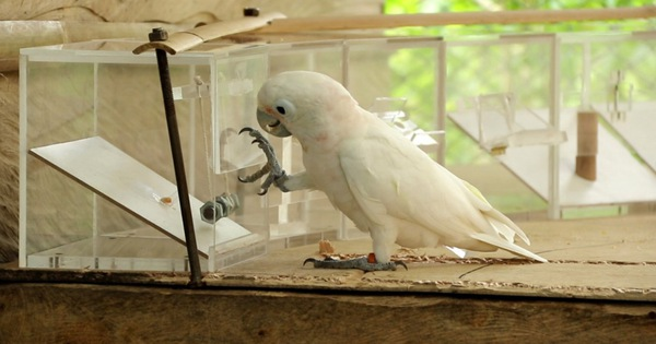 Động vật được con người nuôi thông minh hơn?