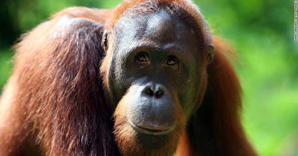 Đại tuyệt chủng lần 6 diễn ra quá nhanh, lỗi hoàn toàn do con người