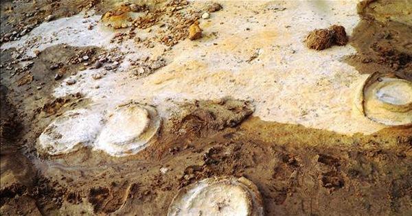Phát hiện hóa thạch sinh vật biển Cúc đá 200 triệu năm tuổi ở Tây Nguyên - kết quả xổ số gia lai