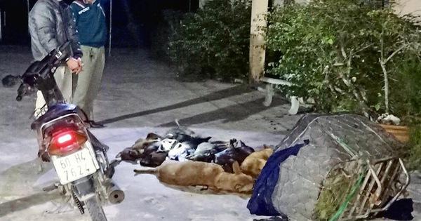 Bắt quả tang 'cẩu tặc' mang 10 con chó trộm được đi tiêu thụ