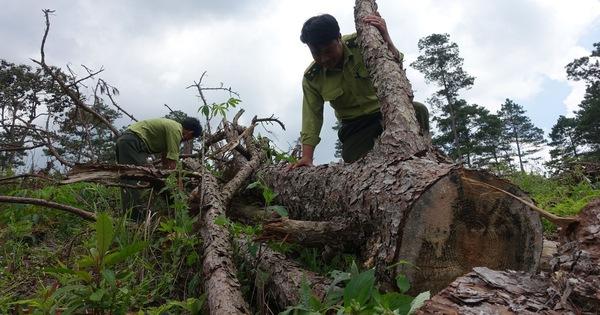 Hơn 150 nghìn người phá rừng làm nông nghiệp ở Tây Nguyên