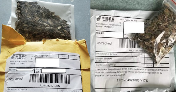 Hạt giống lạ gửi từ Trung Quốc nghi để câu review ảo