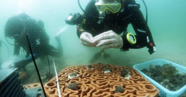 Dùng máy in 3D cứu san hô