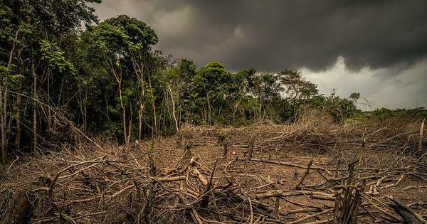Thiên nhiên đang 'rơi tự do' vì lối sống của loài người
