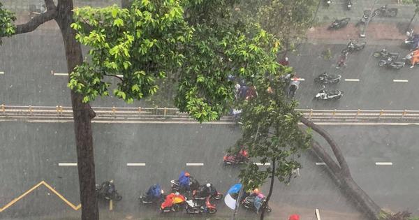 Người bị cây ngã đè trên đường Nguyễn Tri Phương đã qua đời