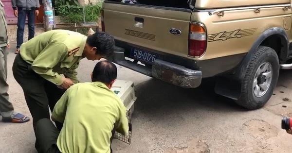 Đã gây mê, di dời nửa đàn khỉ 'đại náo' khu dân cư ở TP.HCM