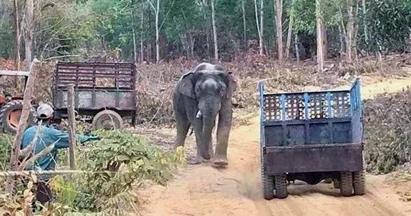 Chi hơn 3,1 tỉ hỗ trợ 127 hộ dân bị thiệt hại do voi rừng