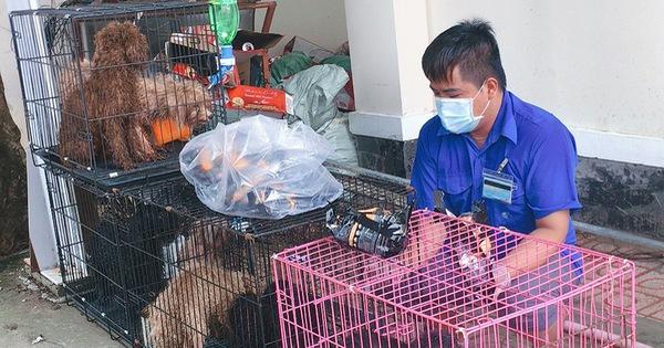 Biên Hòa: Chủ đi cách ly, phường đón 12 con chó về trụ sở nuôi giùm