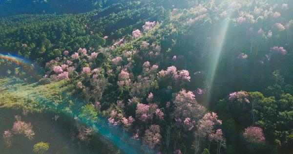 Phát động trồng ''rừng trong thành phố, thành phố trong rừng''