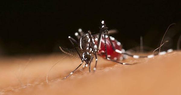 WHO công nhận Trung Quốc xóa sổ sốt rét sau 70 năm