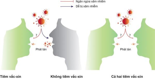 2 yếu tố quyết định khả năng giảm lây truyền virus của vắc xin COVID-19,