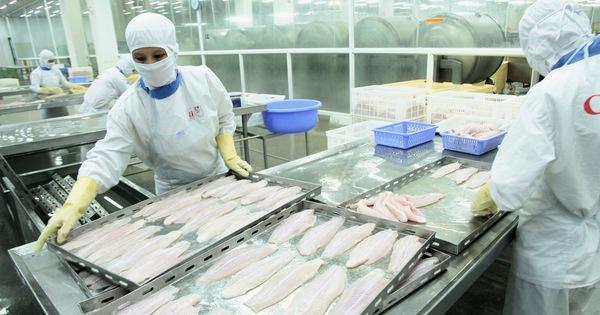 Chế biến thủy sản giảm 60-70%, Bộ Nông nghiệp đề nghị ưu tiên tiêm vắc xin cho 100% công nhân