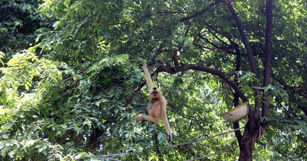 Thảo Cầm Viên Sài Gòn đổi hổ lấy đà điểu, lạc đà